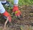 1 600 drzew zasadzonych przez pracowników Banku Pekao w Tatrzańskim Parku Narodowym